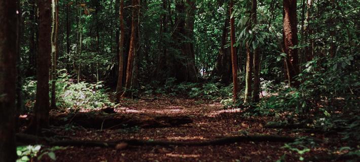 La biomasa es materia orgánica de origen vegetal o animal reutilizada como fuente de energía