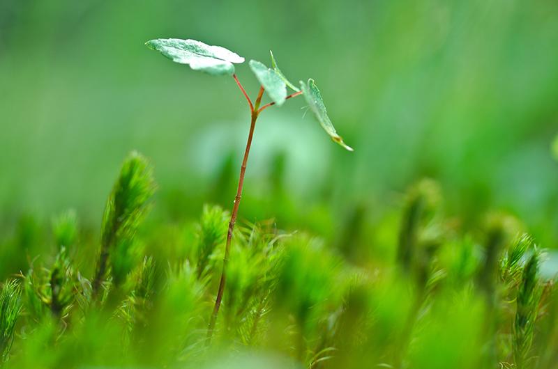 agricultura-sostenible-hidroponica